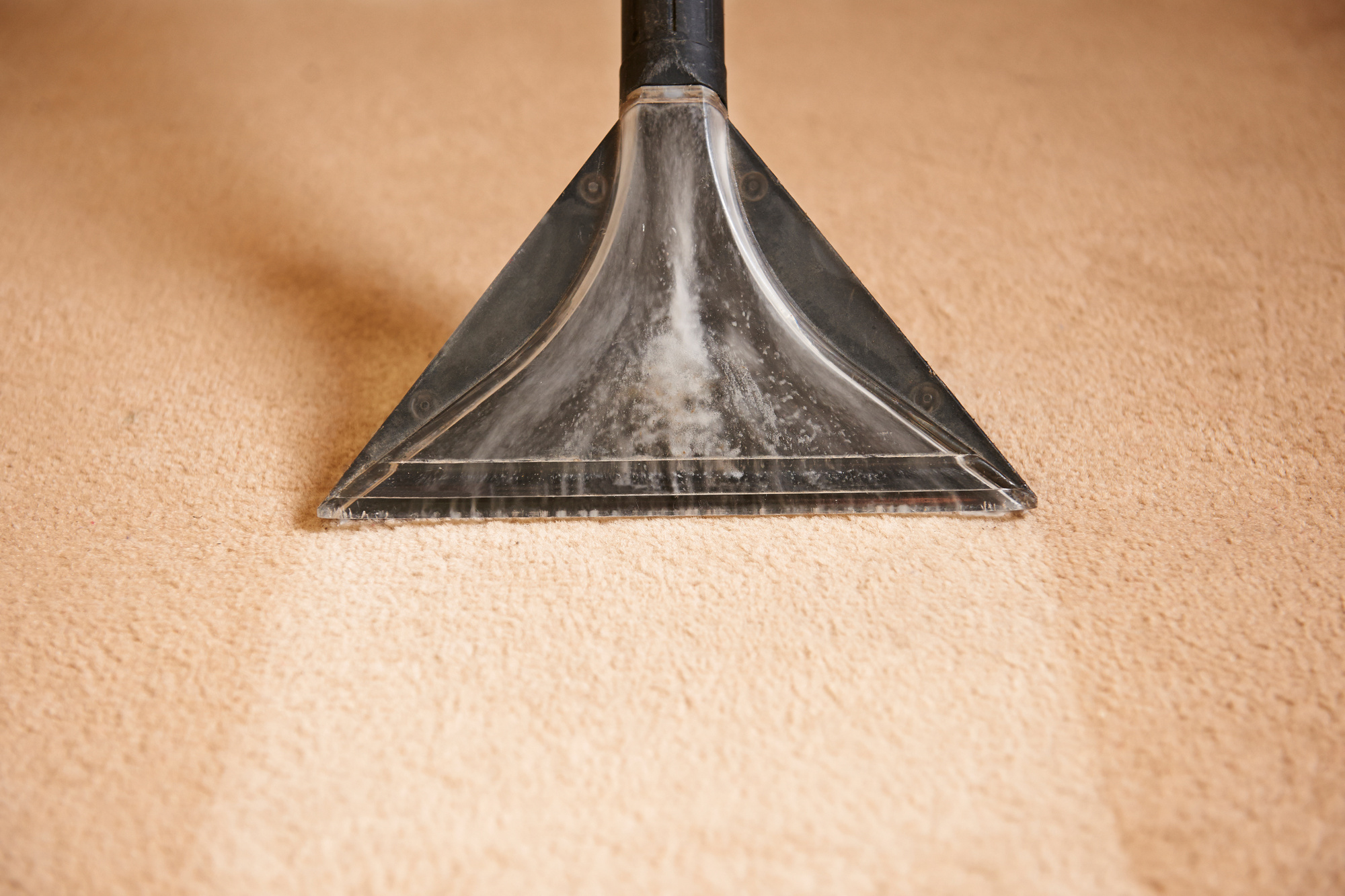 how often should you shampoo your carpet